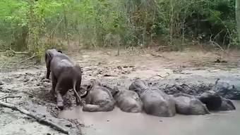 Elefantenbabys aus Schlammgrube gerettet