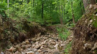 Giglerbach: Das Bachbett ist tief ins Gelände eingeschnitten, die Wurzeln liegen frei.