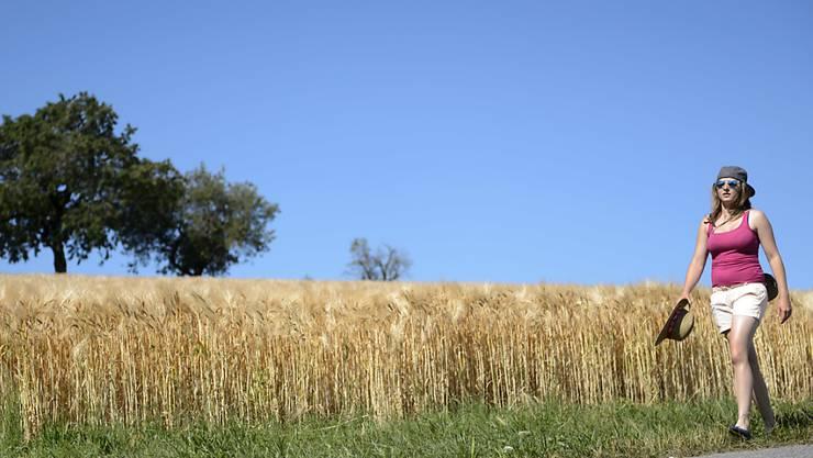 Weizenfelder in der Schweiz liefern in diesem Jahr weit weniger Ertrag. (Archivbild)