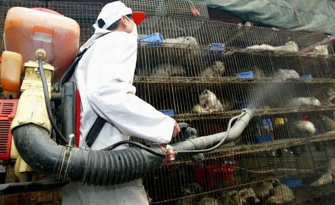 Nach dem Mers-Ausbruch wurden auf Märkten in Chinas Provinz Guandong Katzen desinfiziert.