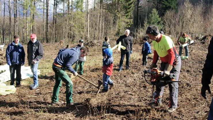 Andreas Wyss vom Forstbetrieb Unteres Bürenamt bohrt ein Loch mit dem Pflanzlochbohrer.