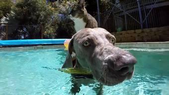 Katze surft auf Hund – was für eine schöne Ausgangslage für ein Video mit einer Actionkamera.