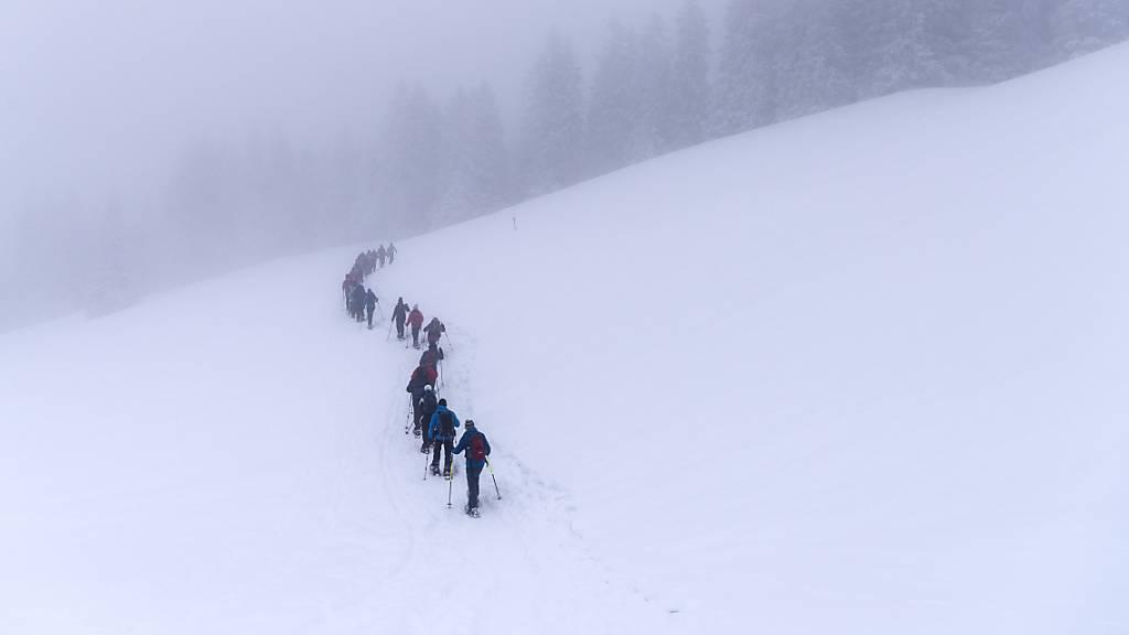 Schneesportler sollen Rücksicht auf Wildtiere nehmen