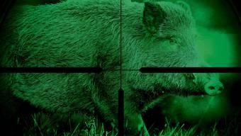 Baselland hat Nachtzielgeräte für den Abschuss von Wildschweinen gekauft.