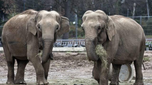 Schicksal der Elefanten mobilisiert Fürstenhaus von Monaco (Archiv)