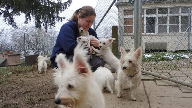 Sie waren dreckig und hungrig – jetzt werden die 15 verwahrlosten Hunde-Geschwister von Tierheim-Leiterin Anna Gasser geknuddelt.