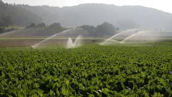 Wasser auf Kulturen: Die Gemüsebauern im oberen Suhrental bewässern in diesen Tagen nochmals ihre Felder. (Bild: Peter Siegrist)