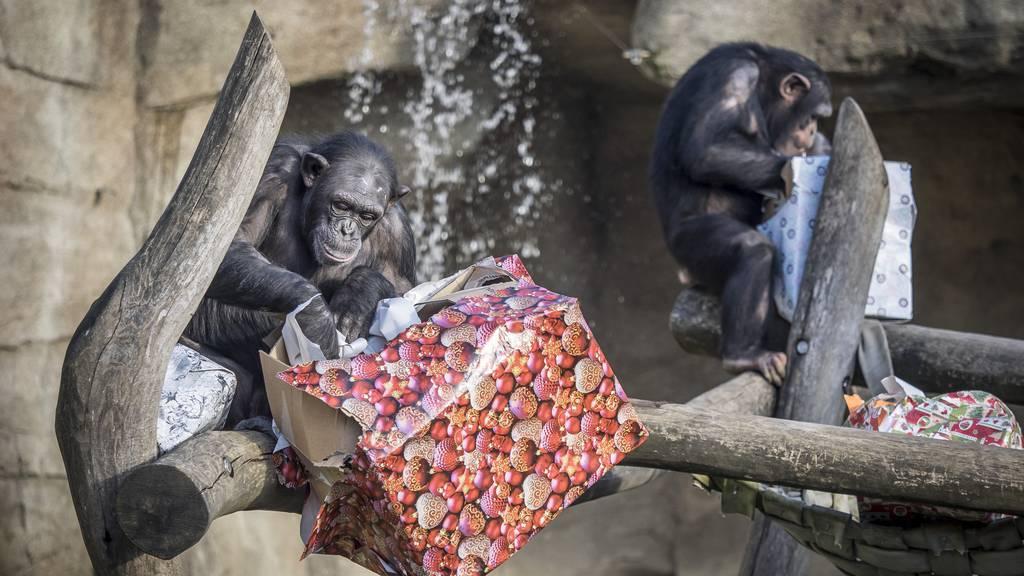 Walter Zoo: «Entscheid ist nicht ganz nachvollziehbar»