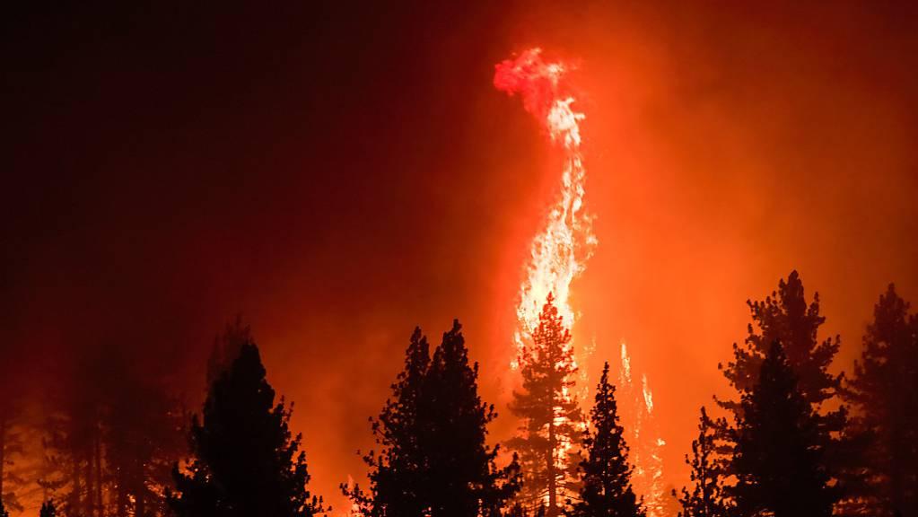 Flammen umschlingen Bäume während des Tamarack-Feuers.