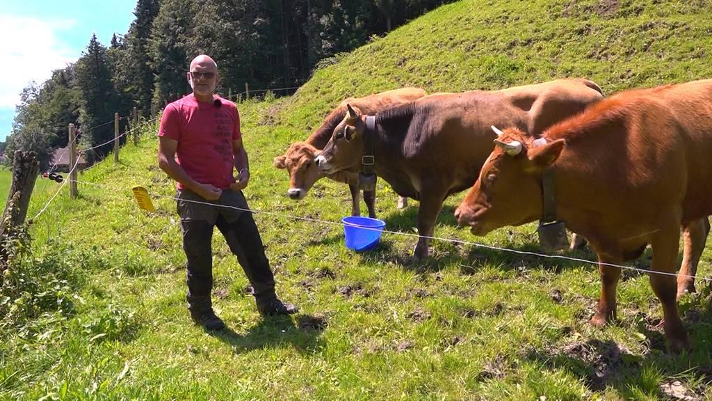 Nach erneutem Kuh-Angriff: Bauer gibt Tipps für Wanderer