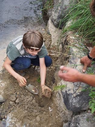 Wasser- und Uferpflanzen werden auf den Buhnen gesetzt