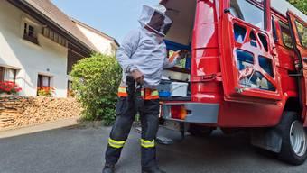 Ende letzter Woche gab die Feuerwehr bekannt, das Bekämpfen von Insektennestern einzustellen. (Symbolbild)