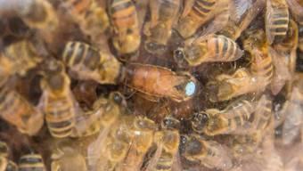 Impressionen von den Bienentagen in Muri