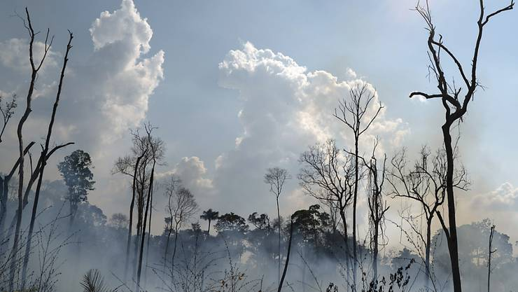 Eines der tausenden Feuer in der Amazonas-Region. Die Weltgemeinschaft ist bestürzt und reagiert etwa mit Finanzhilfen.