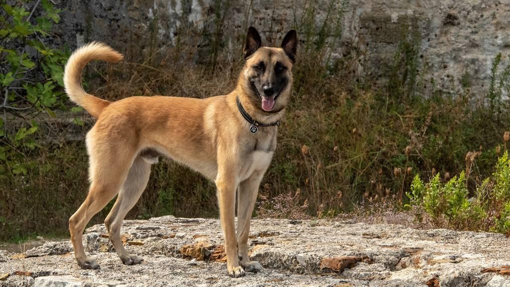 Polizeihund Jango findet vermissten Mann