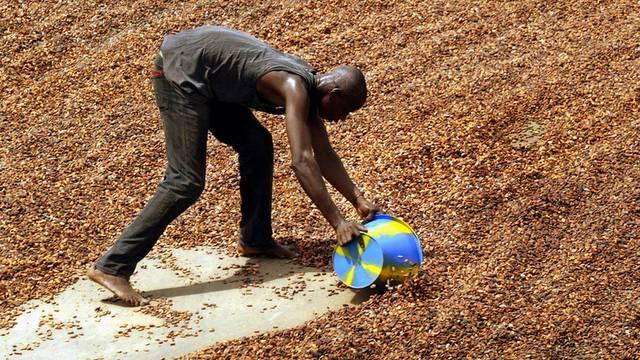 Nach dem Trocknen in der Sonne: Ein Arbeiter sammelt ivorische Kakaobohnen ein (Archiv)