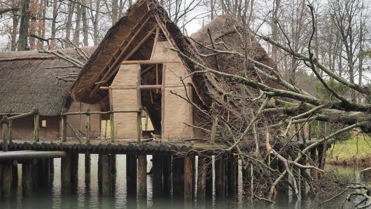 Durch eine vom Sturm Burglind entwurzelte Buche, welche direkt auf eines der Pfahlbauer-Häuschen im Bally-Park fiel, wurde das Dach und teils auch Seitenwände der historischen Nachbauten weitgehendst zerstört.
