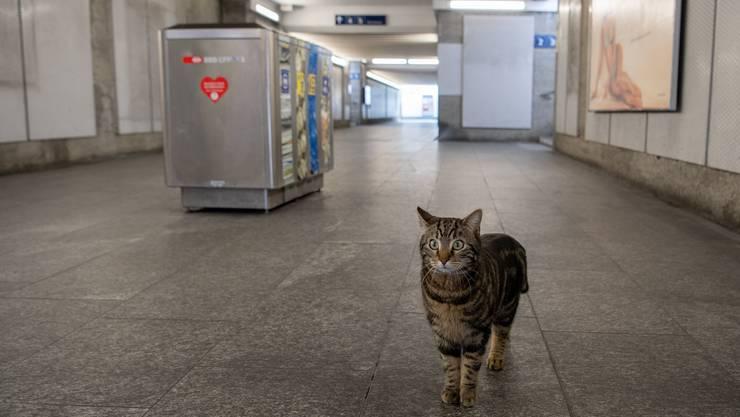 In den Bahnhöfen herrscht gähnende Leere. Die ÖV-Betriebe verlieren Dutzende Millionen Franken pro Monat.