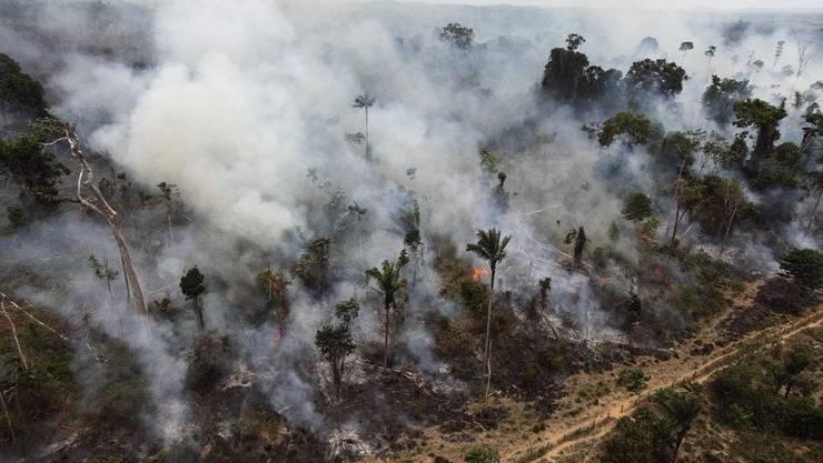 Ein Bild von 2017, dass die Zerstörung der illegalen Rodungen zeigt.