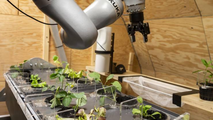 Für das letzte Mondhabitat entwickelten Studierende unter anderem ein automatisiertes hydroponisches Anbausystem. Beim nächsten Habitat soll alles ferngesteuert funktionieren. (Archivbild)