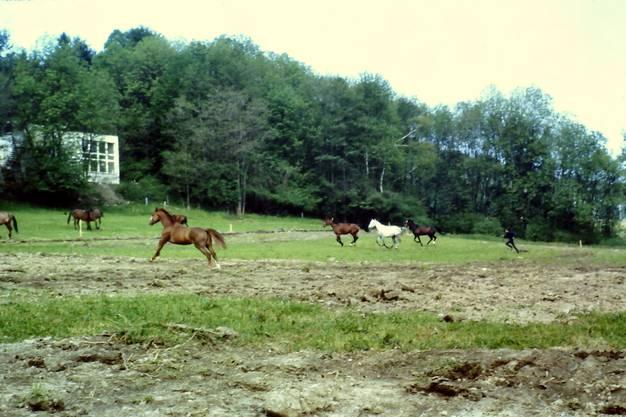 Das Areal Familien Garten-Vereins war vor 1964 eine Pferde- und Rinderwiese.