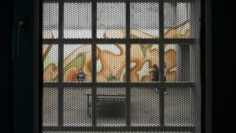 Ausschaffungsgefängnis Bässlergut Reportage