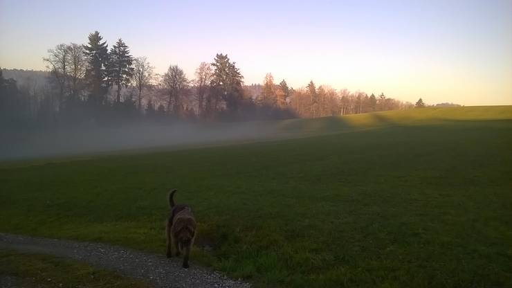 Sonne schon früh morgens über dem Teufenthal.