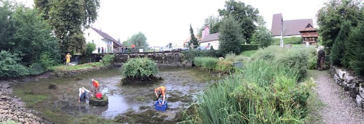 Die Zivilschützer reinigen den Dorfweiher in Boningen.