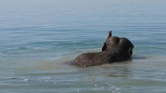 Erst ein Sandbad, dann geht es rein in den See: So baden Elefanten.