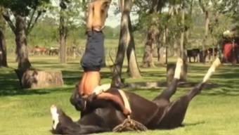 Pferd und Reiter beim gemeinsamen Yoga.