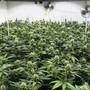 Cannabis ist verboten und wird trotzdem massenhaft konsumiert. Für den Nationalrat ist das kein Grund, Hanf zu legalisieren. (Archivbild)