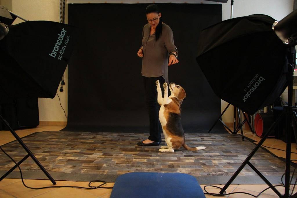 Nicole Hollenstein in ihrer Tiermodelagentur (© FM1Today/Dario Brazerol)