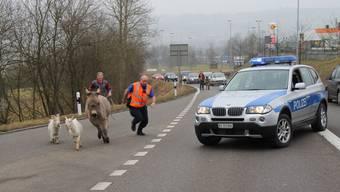 Die Polizei, dein Tierfreund: Ausgebüxte Vierbeiner auf der Flucht