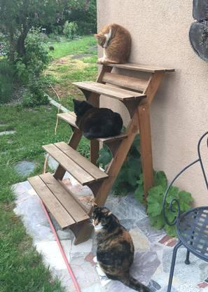 Unsere drei Katzen auf Distanz!