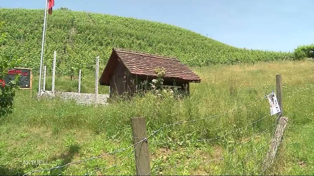 """Hobbywinzer soll Steinmauer abreissen: """"Dann soll der Kanton kommen und es abreissen"""""""