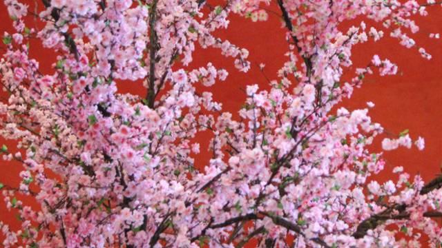 Sieben Kirschbäume in Kestenholz sind zu alt, müssen gefällt und zum Teil auch ersetzt werden. (Symbolbild)