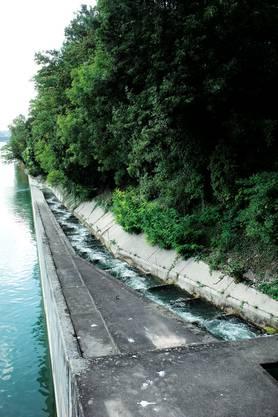 Die Lachstreppe beim Kraftwerk am Ufer der Rheinhalde.