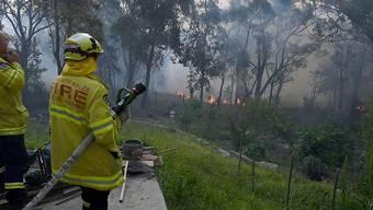 Rund hundert Buschfeuer wüteten entlang der Ostküste Australiens. 17 der Brände konnte die Feuerwehr noch nicht unter Kontrolle bringen.