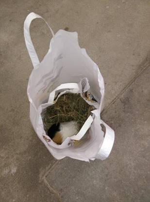 Das Meerschweinchen wurde in eine Tüte mit Heu gepackt.