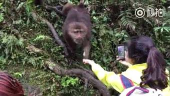 Dieser Affe ist nicht nur klug, sondern auch ein guter Schauspieler.