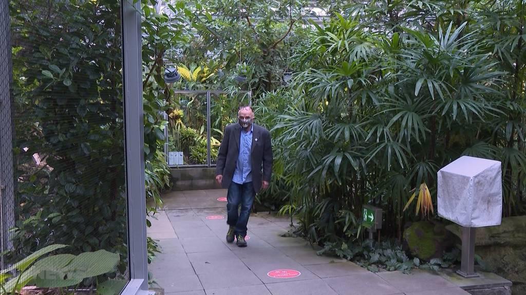 Corona-Schutzkonzept: Berner Museen und Tierpark Dählhölzli öffnen wieder