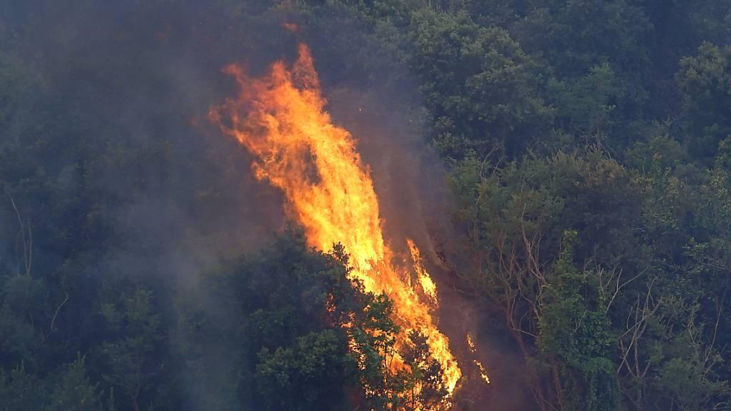 Flammen wüten auf Ferieninsel Sardinien - Evakuierungen