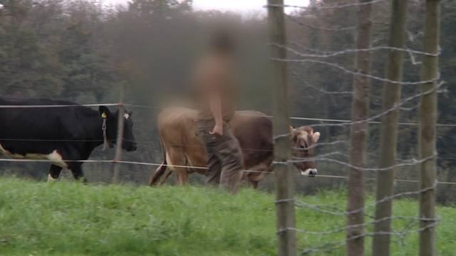 Tierquäler-Skandal Hefenhofen