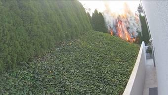 Darum gings: die brennende Hecke in des Nachbars Garten.