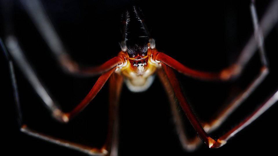 In Australien leben viele giftige Spinnen. (Symbolbild)