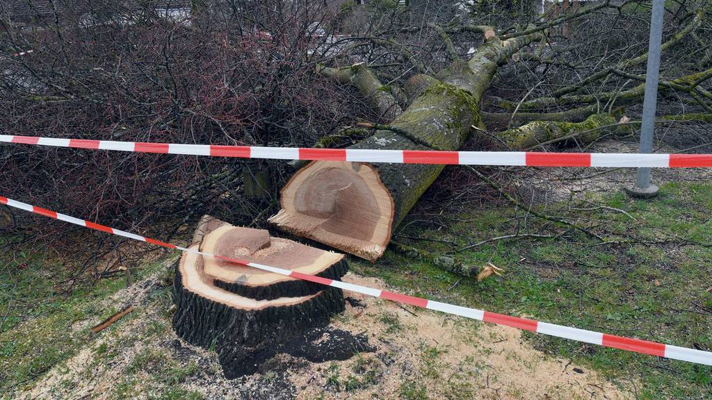 In der Nacht fällte ein Unbekannter in Steinach Bäume.