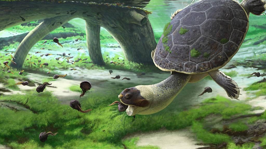 Eine künstlerische Nachbildung der «schnellköpfigen Frosch-Schildkröte» bei ihrer Saug-Schnapp-Jagd auf Kaulquappen. (Pressebild)
