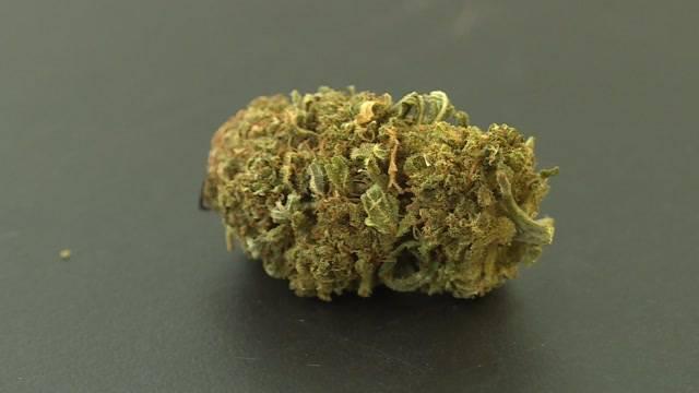 Legales Cannabis im Trend