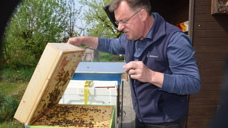 Imker Marcel Strub bei den Bienen.