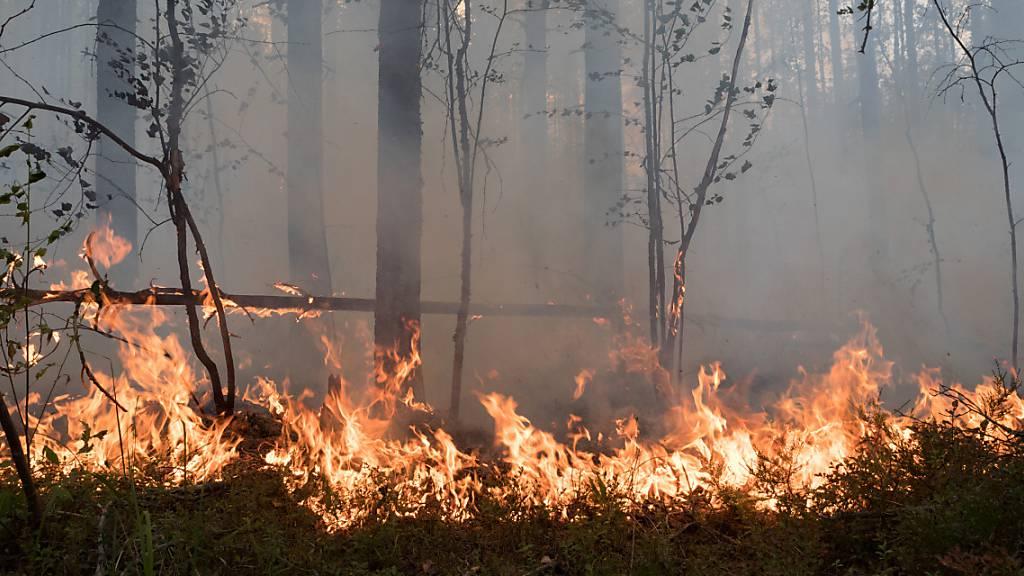 Waldbrände in Russland: Mehr als 100 Orte leiden unter Rauch